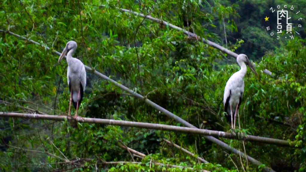 tam coc attraction bird 6