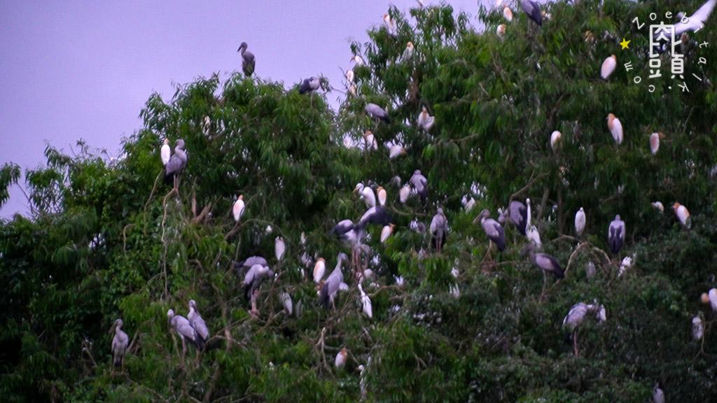 tam coc attraction bird 8
