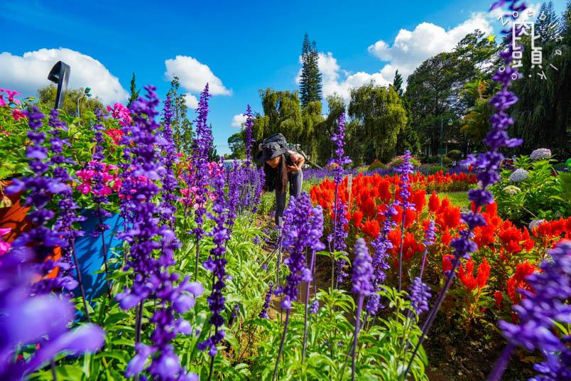 dalat flower garden 2