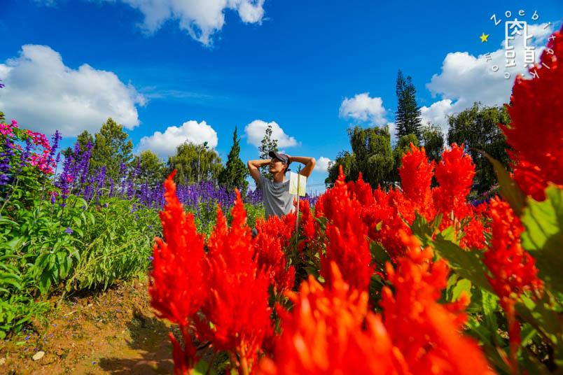 dalat flower garden 4