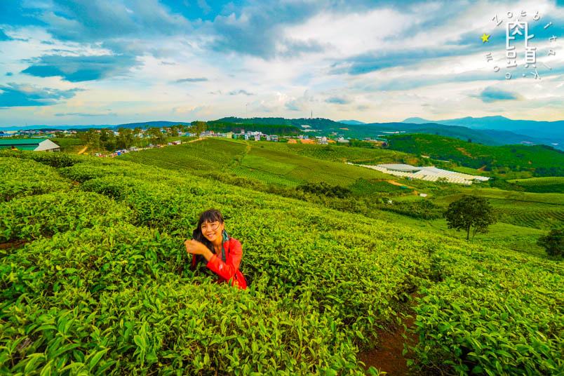 dalat tea farm 4