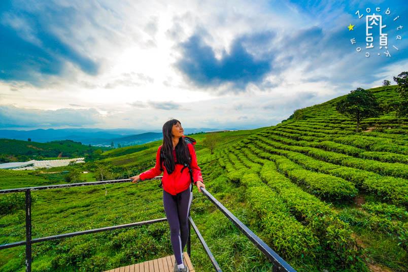 dalat tea farm 8