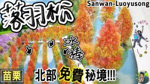 sanwan luoyusong logo 1