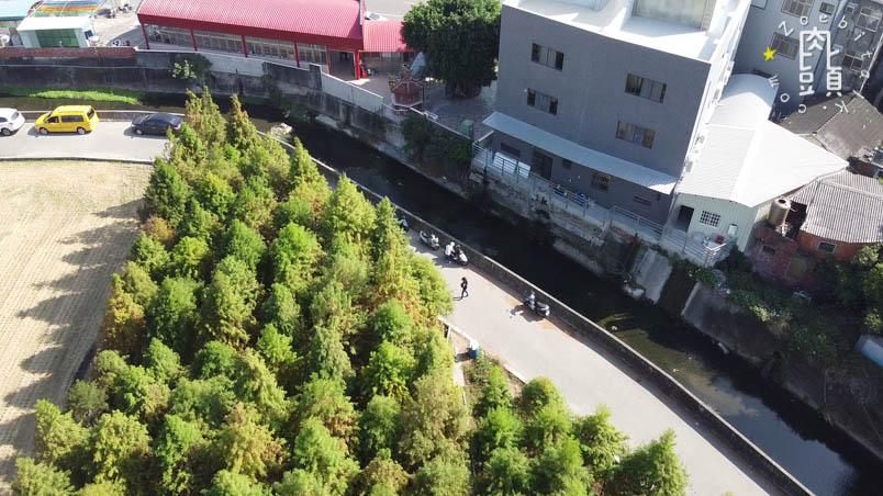 chungbuk fall pine 10