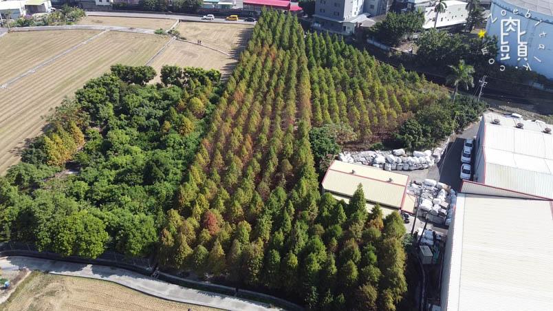 chungbuk fall pine 11