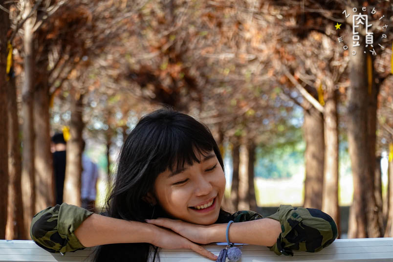 chungbuk fall pine 8