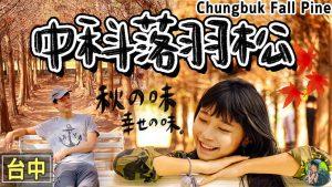 chungbuk fall pine logo 1