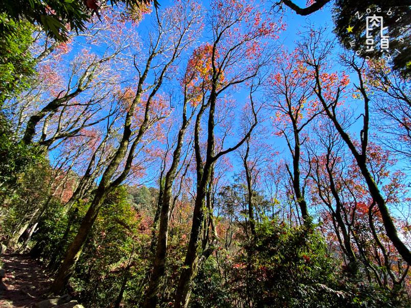 yuanzui shao lai trail 38