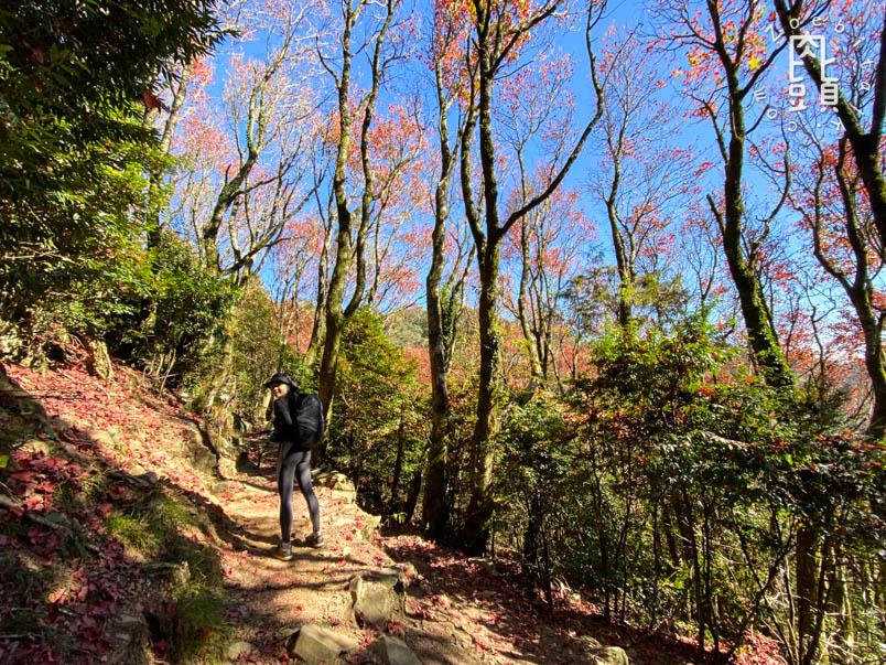 yuanzui shao lai trail 40