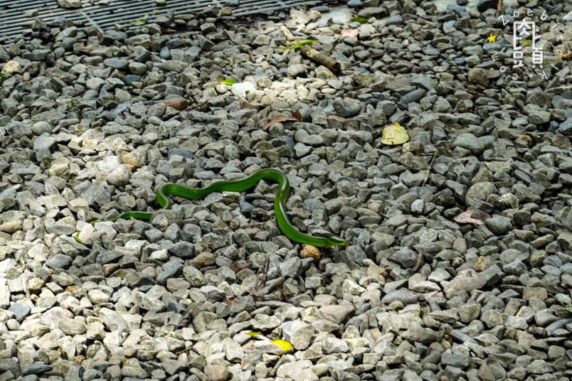 yilan fushan botanical garden 14
