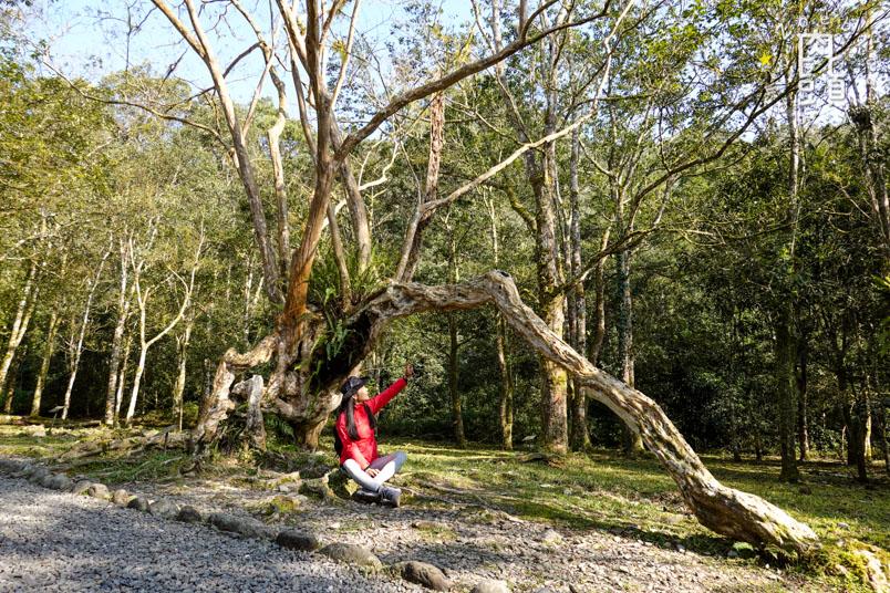 yilan fushan botanical garden 5