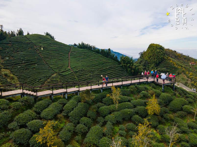 nantou gingko forest 21
