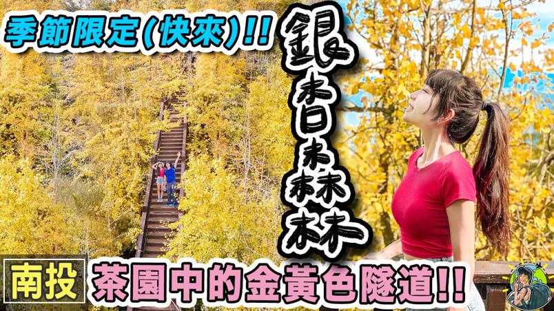 nantou gingko forest park cover 1