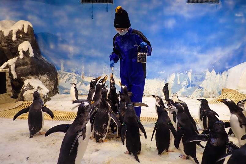 pingtung nmmba penguin 1