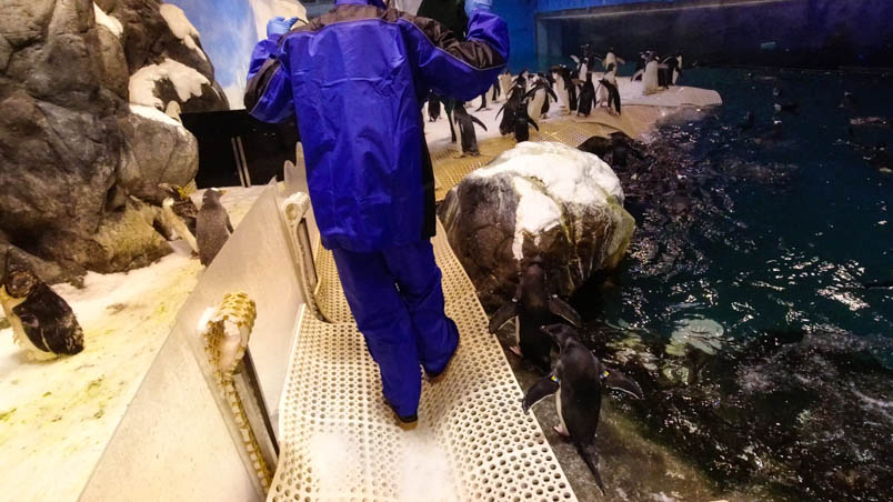 pingtung nmmba penguin 12