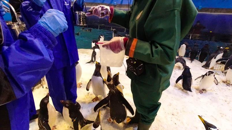 pingtung nmmba penguin 13