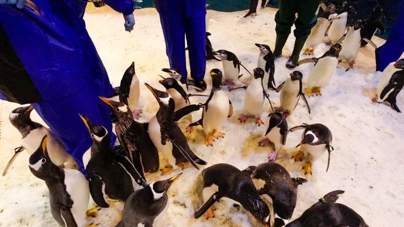 pingtung nmmba penguin 14