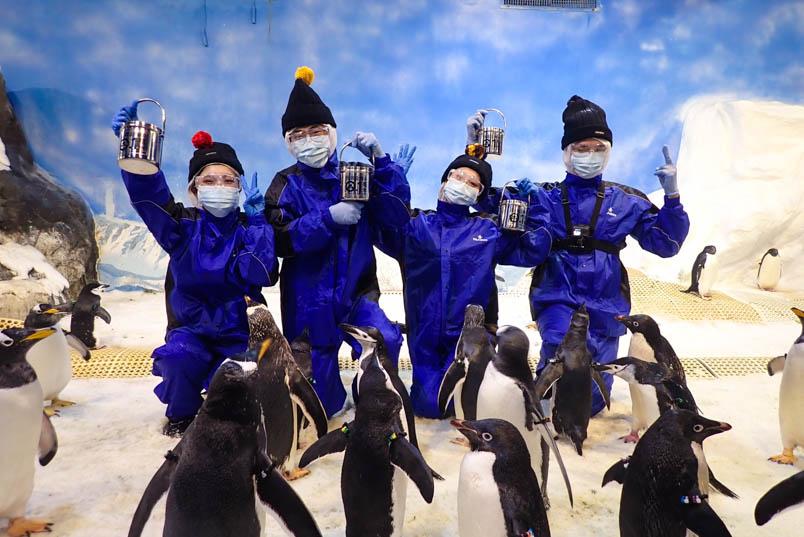 pingtung nmmba penguin 2